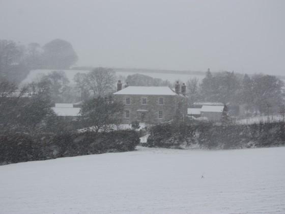 Ethy in Snow